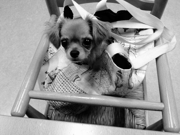 Lilly Puppy