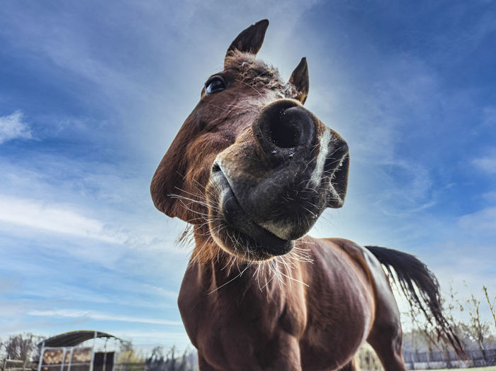Close-up portrait of a horse against sky