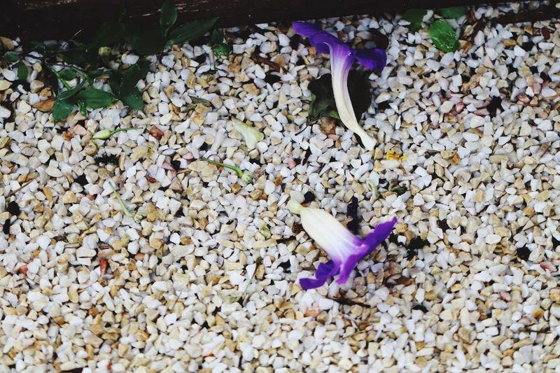 Flores no chão