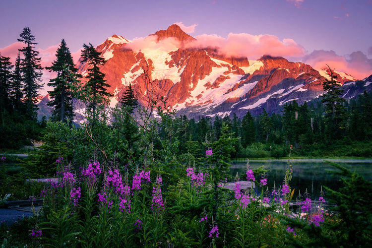 Beauty In Nature Day Flower Growth Lake Mountain Mountain Range Nature No People Outdoors Purple Scenics Sky Tranquil Scene Tranquility Tree