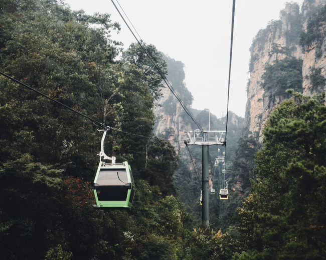 Overhead Cable Car Hanging Amidst Trees In Forest