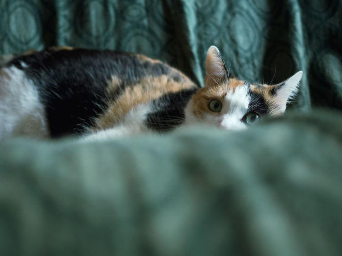 Close-up portrait of cat resting on couch