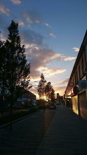 Sunset... Tree