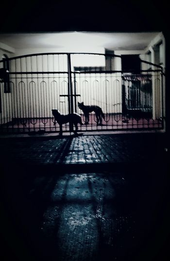 Rainy evening in Davao, two dogs patiently waiting for their owner. Petphotography Rainynight Silhouette Darkness And Light Eyeem Dark Gallery