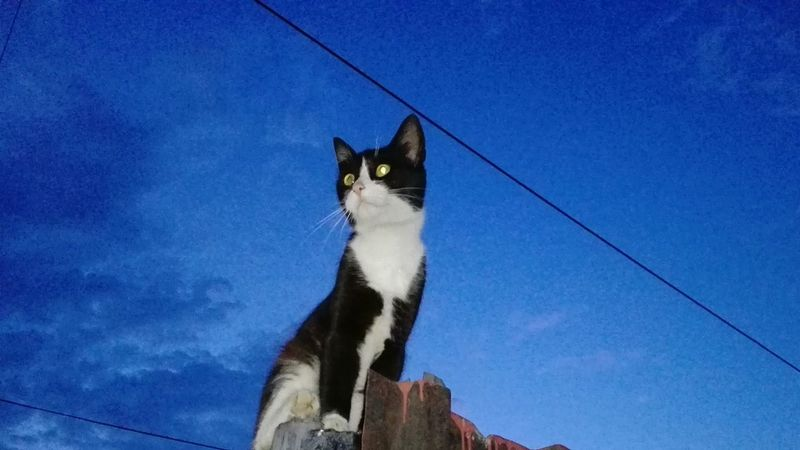 Glitch Low Angle View No People Sky One Animal Outdoors Domestic Animals Blue Nature Cat Uppon Blue Sky Wolfzuachis Edited By @wolfzuachis On Market Wolfzuachiv Huaweiphotography Showcase: 2017 Veronica Ionita @WOLFZUACHiV Eyeem Market Ionita Veronica Showcase: June Cats Of EyeEm Cat