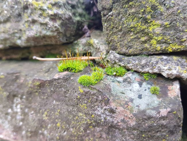 Green Island Green Color Stone Nature Photography Moss Day No People Animal Themes Outdoors One Animal Close-up Nature