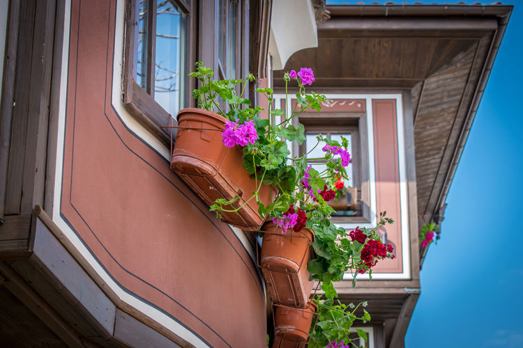 Low angle view of flower pots on building windows