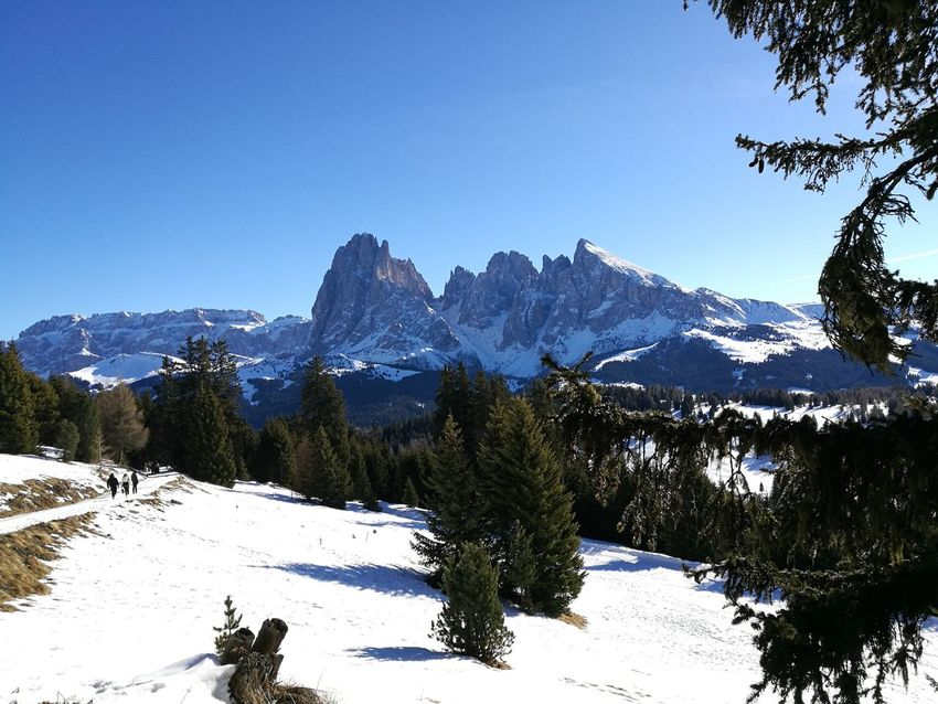 Morgana Dolomiti Italy UNESCO World Heritage Site Christmas Holidays HuaweiP9 Huaweiphotography Huawei P9 Leica Mountain Winter Mountain Range Tree Pinaceae Nature Pine Tree Landscape Cold Temperature Snowcapped Mountain Mountain Peak Outdoors Beauty In Nature Scenics Forest No People Sky Clear Sky Day
