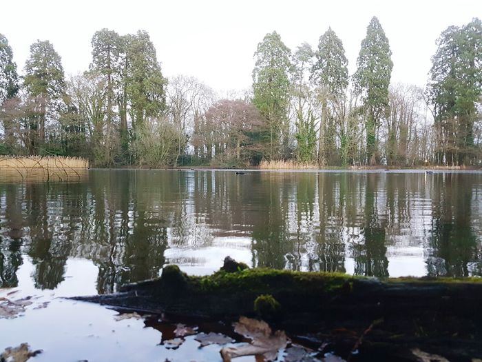 Lone coot Reflection Water Tree Sky Nature Lake No People Outdoors Growth Day Animal Themes Tredegar House Newport National Trust 🇬🇧 National Trust Lakeside Lake View Water Reflections Water Surface Beauty In Nature Reflection Lake Tranquility Coot Bird Log Driftwood