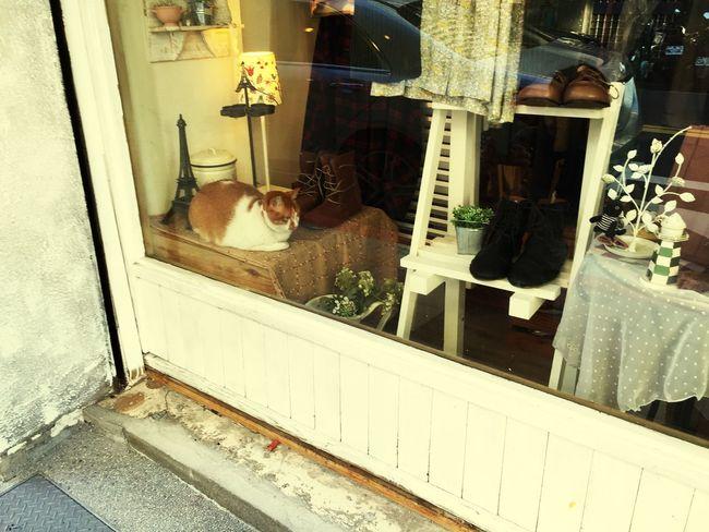 Cat Shop Owner