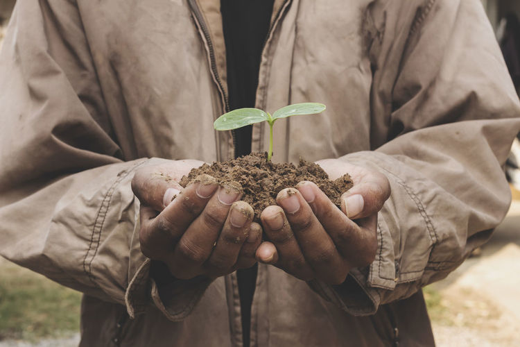 Midsection of person holding seedling