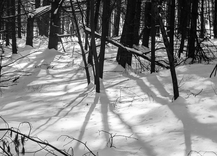 trees in mid afternoon Shadows Snow Hiking Nature