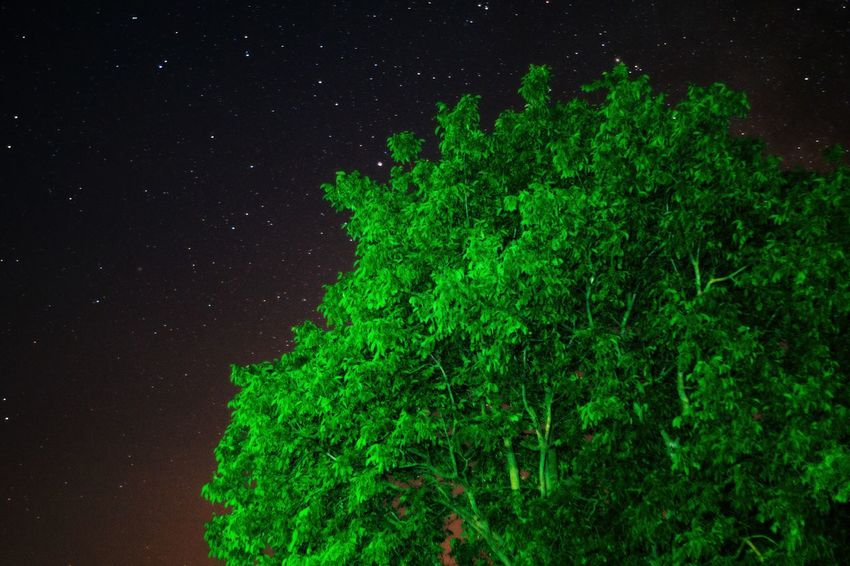 Night Green Color Nature Star - Space Beauty In Nature Tree Galaxy Outdoors No People Sky Landscape Space ScenicsAstronomy Fantasy The Week On EyeEm EyeEmNewHere Sonya58 Rewild Nature Photography Sony