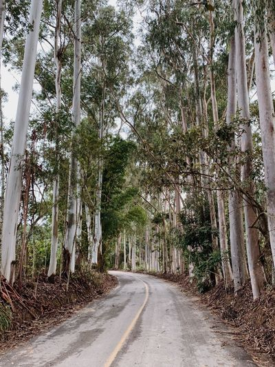 Tree Plant Road The Way Forward Transportation Direction Nature Beauty In Nature Tranquility No People Growth Day Outdoors Diminishing Perspective Land Empty Road Tranquil Scene Scenics - Nature Forest Non-urban Scene