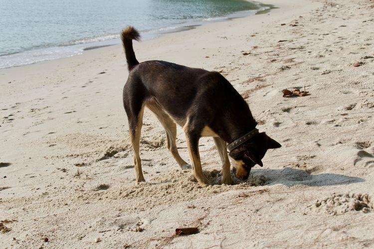 One Animal Animal Themes Animal Mammal Land Beach Vertebrate Sea Domestic Animals Sand Water Pets Dog Domestic Nature No People Day Standing Animal Mouth