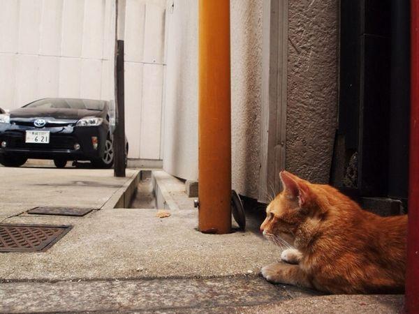 くるまの下いこか Cat 猫