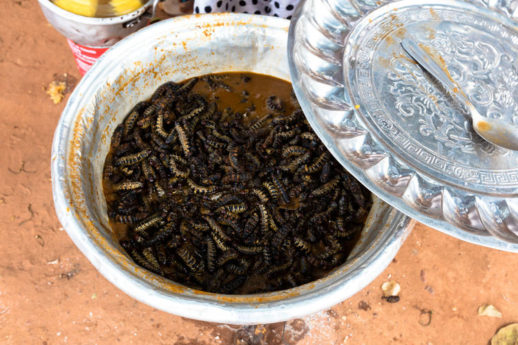 High angle view of silkworms in container on field