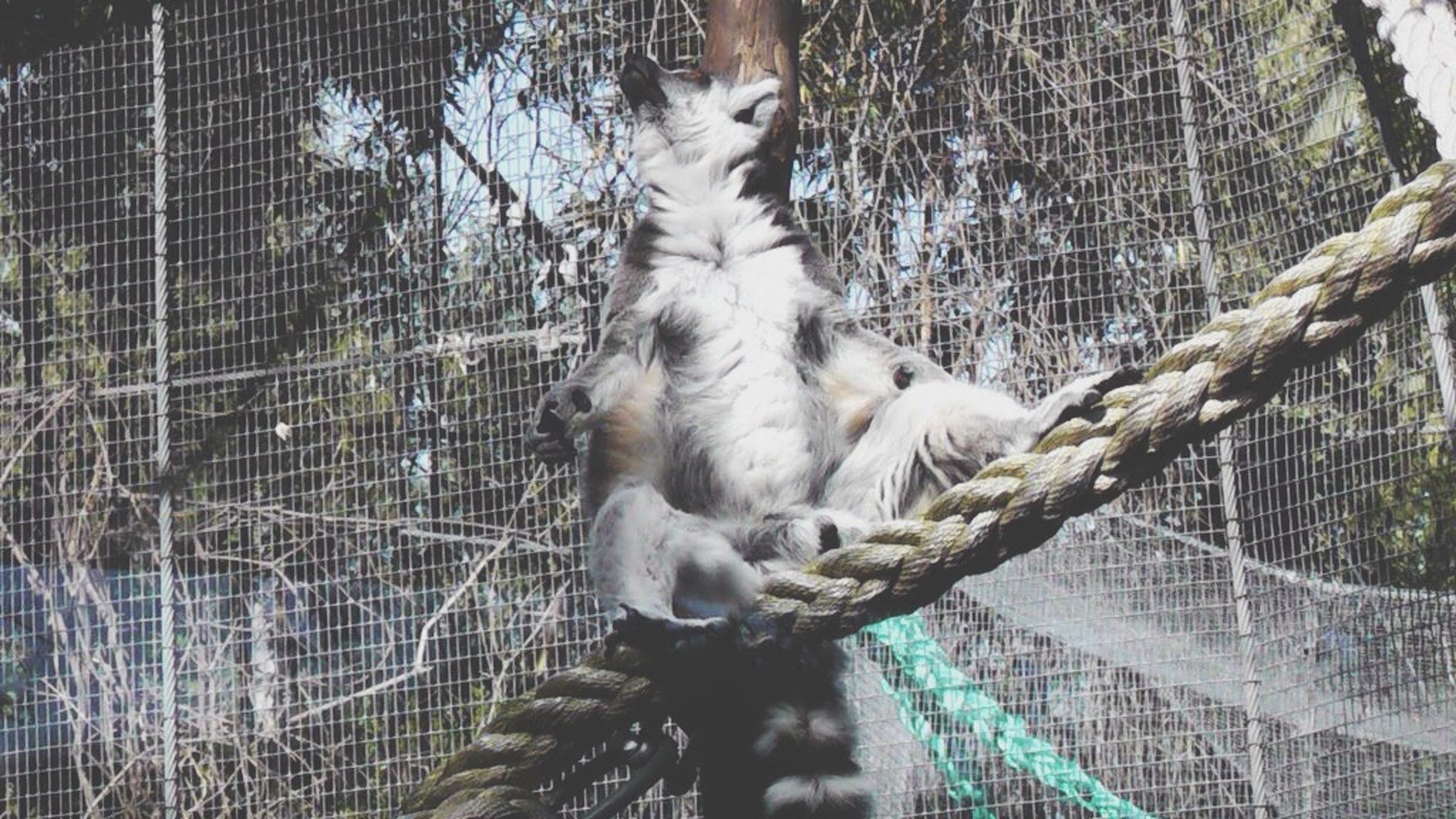 animal themes, one animal, fence, chainlink fence, bird, animals in the wild, wildlife, cage, mammal, animals in captivity, domestic animals, focus on foreground, day, protection, close-up, outdoors, metal, branch, one person, two animals
