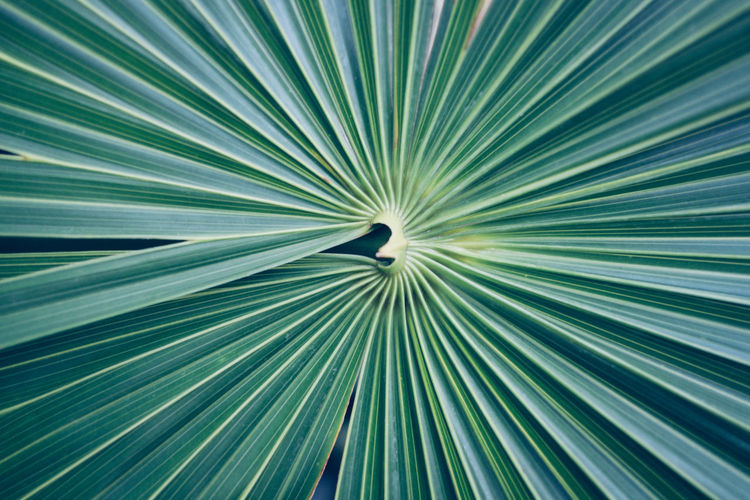 Hortus Botanicus No People Full Frame Leaf Abstract Backgrounds Palm Leaf Palm Tree Pattern Plant Part Close-up Nature Green Color Striped Beauty In Nature Growth Plant Blurred Motion Tropical Climate Abstract Backgrounds Concentric My Best Photo