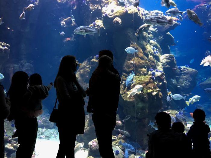 Rear View Of People Standing In Aquarium