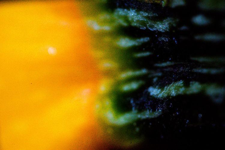 Full frame shot of multi colored tree