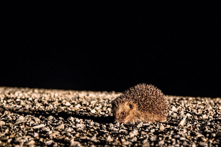 Animals In The Wild Wildlife & Nature Wildlife Photography Wildlife Photos Animal Hedgehog Igel Wildlife