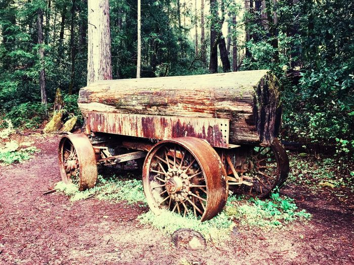 Redwood Log On The Road Landscape Forest Nature Timber IPhoneography California