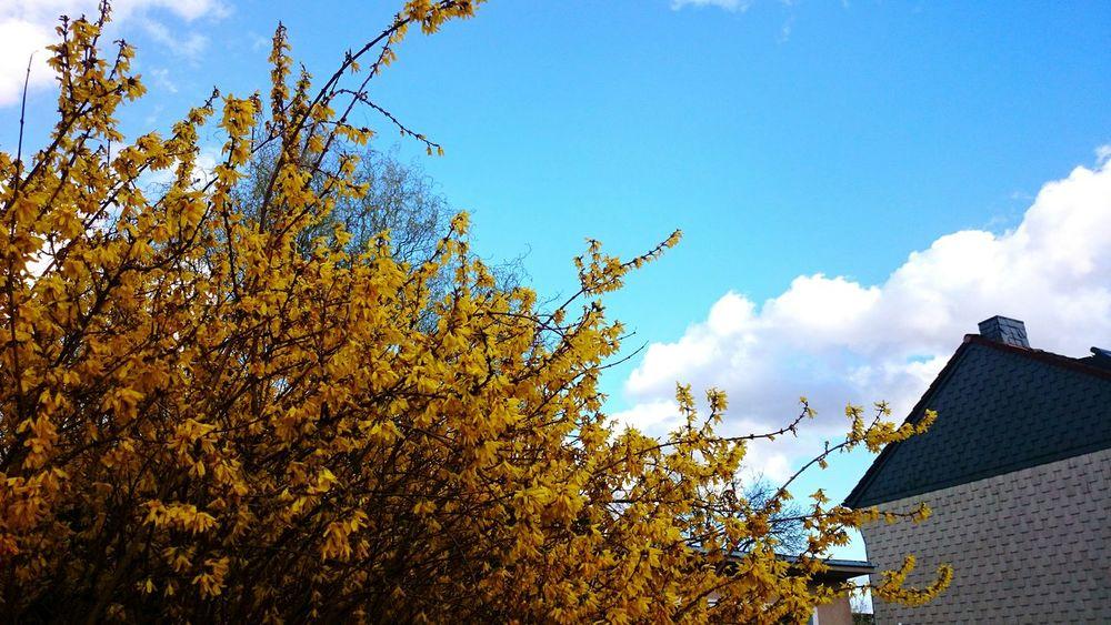 Flowers Sky Beautiful Day EyeEm Nature Lover Kontrast Colors Clouds