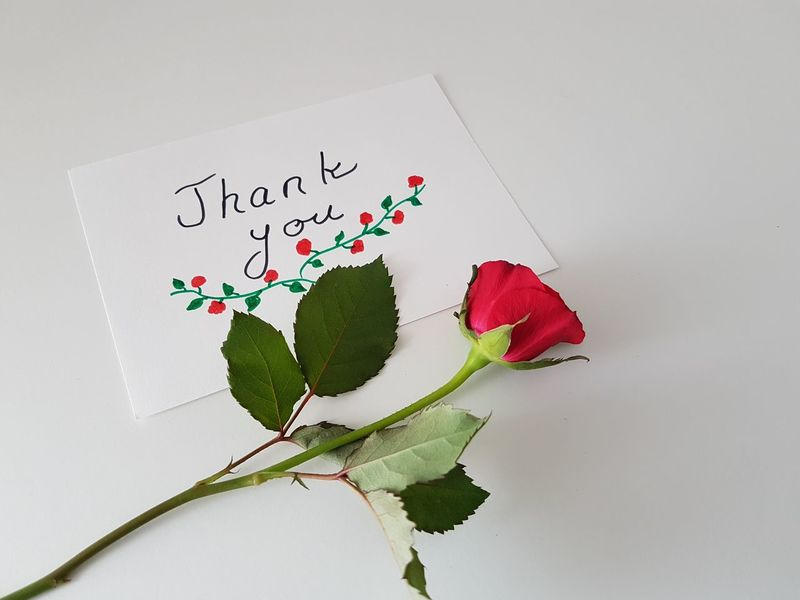 Thank You Thank You Card Note Cards Rosé Roses Mother Bloom Appreciate Stem Seasonal Lovely Friendship One Rose Flower White Background Sketch Pad Studio Shot Red Paper Leaf Close-up Plant Handwriting  Note - Message Message Note Written Drawn Short Phrase Greeting Card