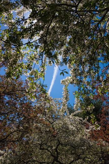 Groundsforsculpture Showcase May Airplane Sky Contrails Tree Trees The Week On Eyem