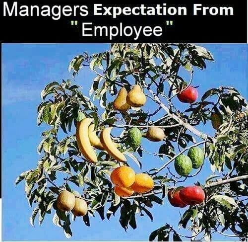Everything In Its Place Manager Employees