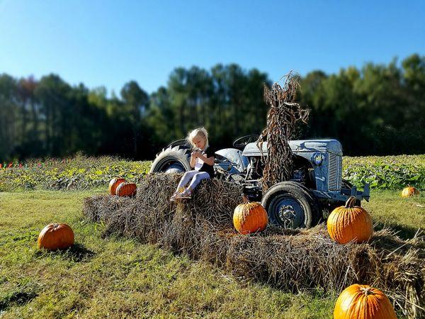 Fall Pumpkins PumpkinPatch🎃 Pumpkin Season