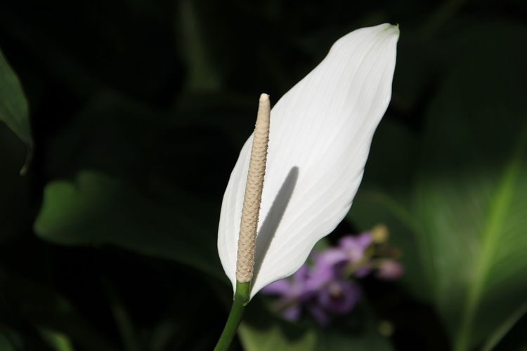 Close-up of white flower blooming in park during sunny day