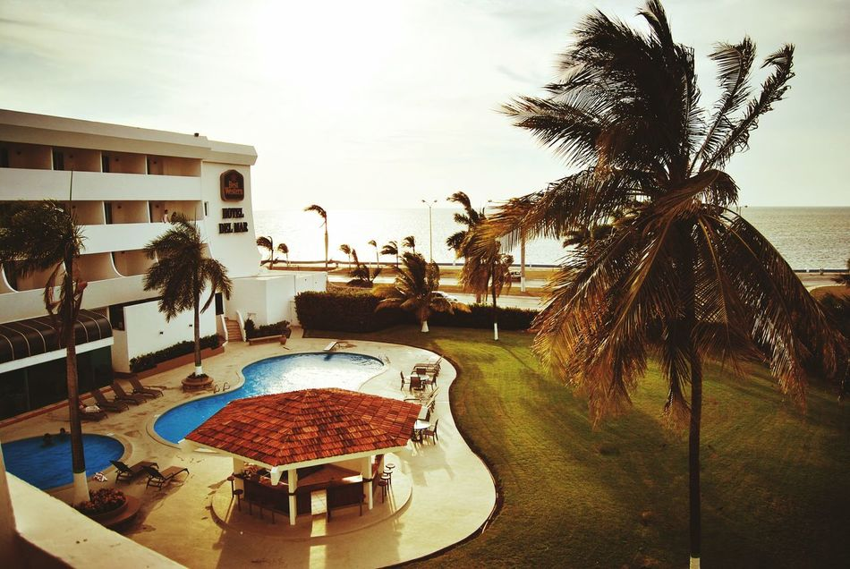 Luxury Swimming Pool Palm Tree Water Residential Building Vacations Horizontal Outdoors Sky Day No People Nature Mexico Mexican Culture Cultura Mexicana Caraïbes Caribbean Sea Campechemexico Campeche