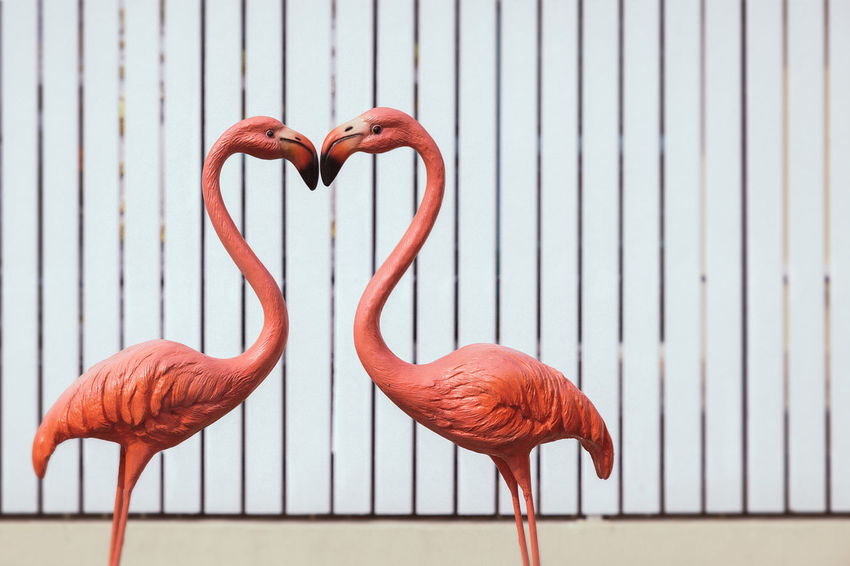 Animal Themes Beauty In Nature Close-up Day Flamingo Focus On Foreground Heartbeat Moments Love Nature No People Outdoors Red Sign Valentine's Day