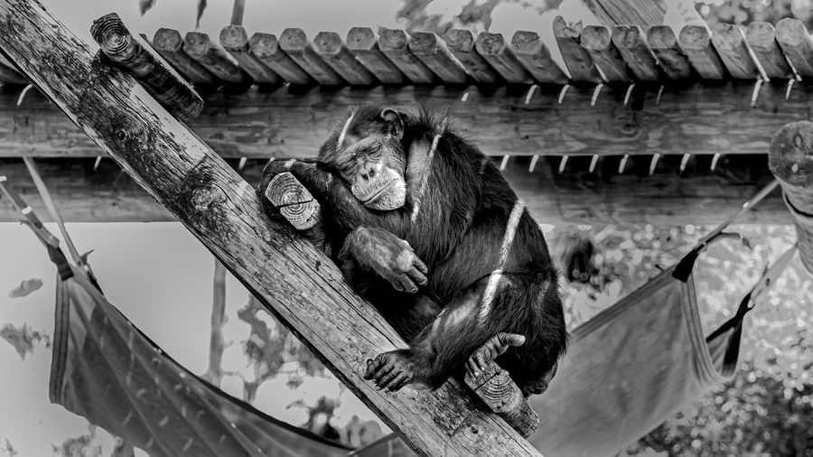 High angle view of monkey sitting in zoo