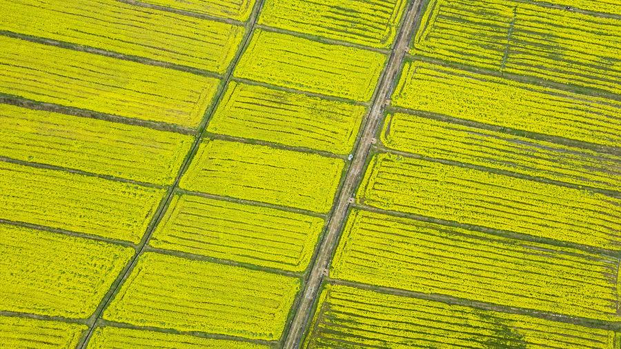 Full frame shot of yellow farm