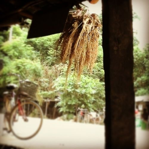 Bird Feed Sparrow Birdfeed Hut Bike Bicycle Thaketa Teashop