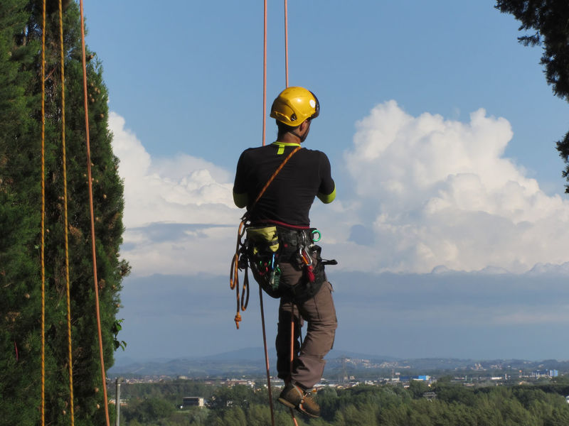 Tree surgeon lumberjack hanging from a big tree Cable Clambering Climbing Cord Equipment Extreme Fasten Hanging Harness Knot Lumberjack Man Person Protection Rappelling Rope Safety Security Strength String Surgeon Tied Tree Trunk Worker