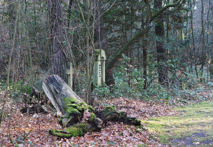 graveyard in Stahnsdorf, Germany Tree Forest Land Plant Nature Trunk Tree Trunk WoodLand Day No People Tranquility Growth Outdoors Wood - Material Field Tranquil Scene Timber Deforestation Non-urban Scene Wood Bark Graveyard Cemetery