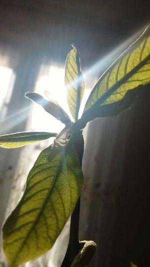 New Life New Start Green Nature Sun Light