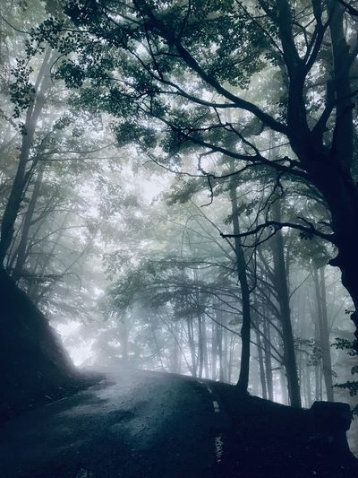 Fog Empty Road Road Catalunya Tree Plant Beauty In Nature Branch Nature No People Day Growth Tranquility Low Angle View Forest Tranquil Scene Scenics - Nature Cold Temperature Tree Trunk Outdoors Sunlight Autumn Mood Stay Out