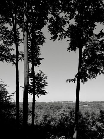 Clear summer day Silhouette Blackandwhite Tree Tree Trunk Nature Beauty In Nature Tranquil Scene Tranquility Growth Scenics Landscape No People Clear Sky