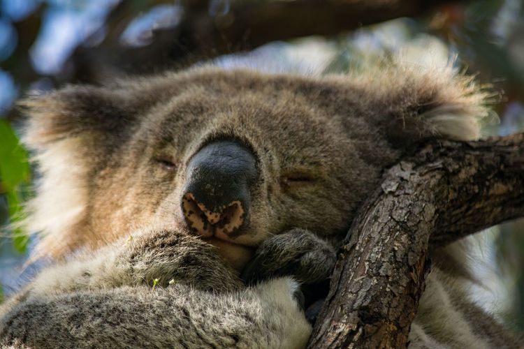 Close-up of animal sleeping on tree
