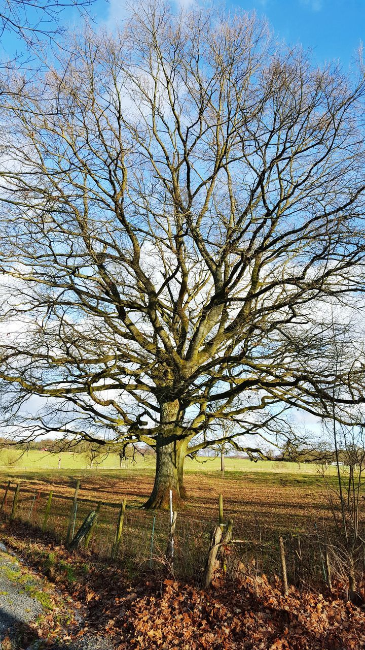 tree, landscape, tranquility, bare tree, tranquil scene, field, nature, sky, tree trunk, beauty in nature, outdoors, day, scenics, no people, branch, lone, clear sky, rural scene