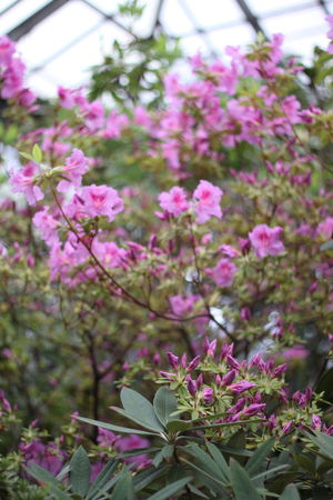 Beauty In Nature Blooming Blossom Branch Close-up Day Flower Flower Head Fragility Freshness Growth Nature No People Outdoors Petal Pink Color Plant Springtime Tree