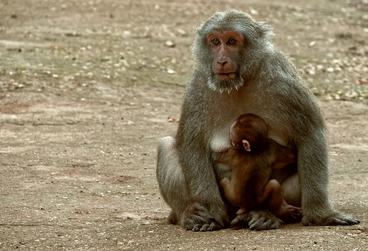 Monkey sitting in a animal looking away