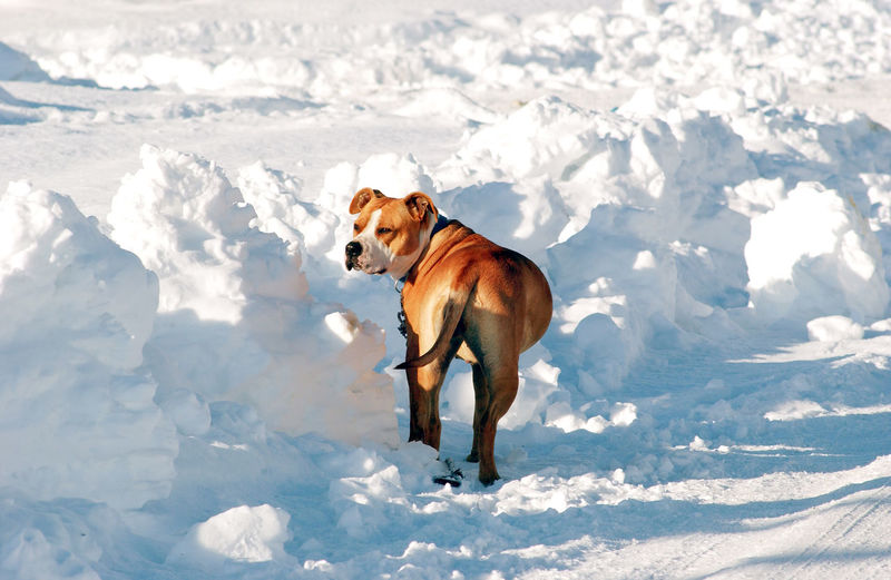 Dog on snow field