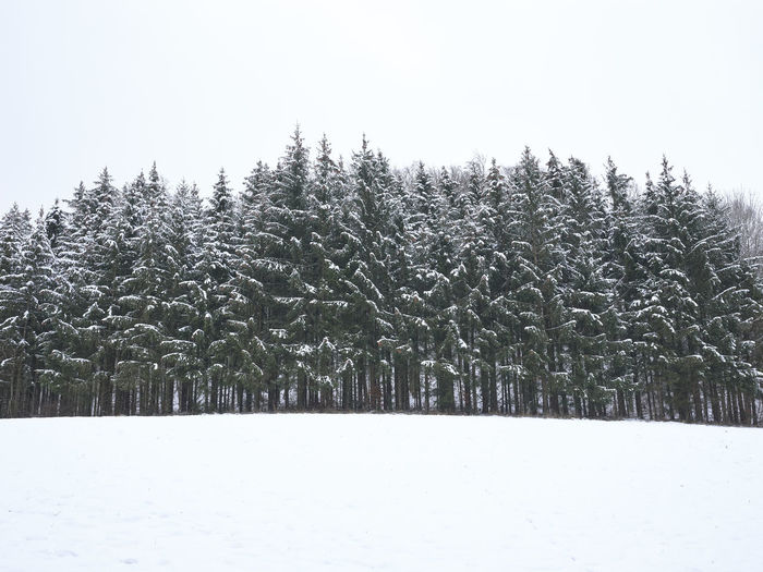 Pine trees on snow covered field against sky