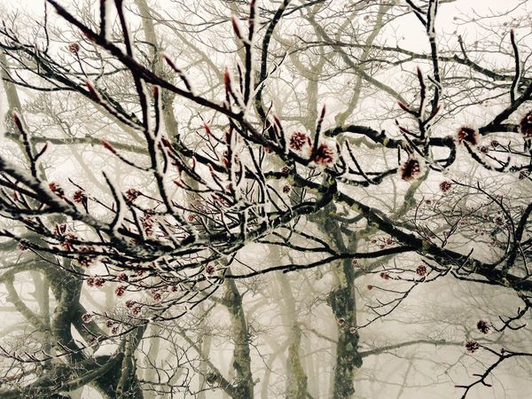 Tree Branch Nature Bare Tree Growth Beauty In Nature No People Outdoors Flower Blossom Tranquility Day Fragility Freshness Sky Close-up